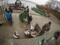 După ce este sortat şi cântărit peştele este încărcat în maşini şi pleacă direct către centrele de distribuţie.Foto: Eduard Vasilică