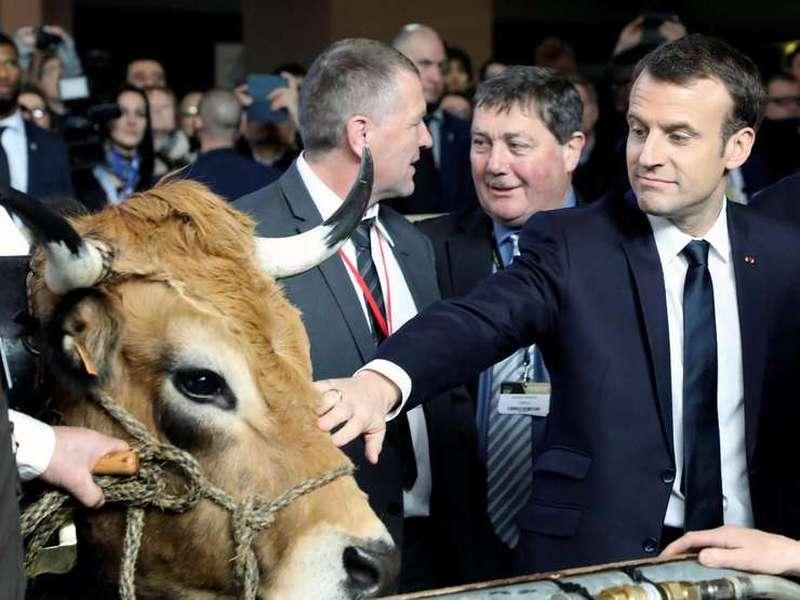 Emmanuel Macron la un targ agricol langa o vaca