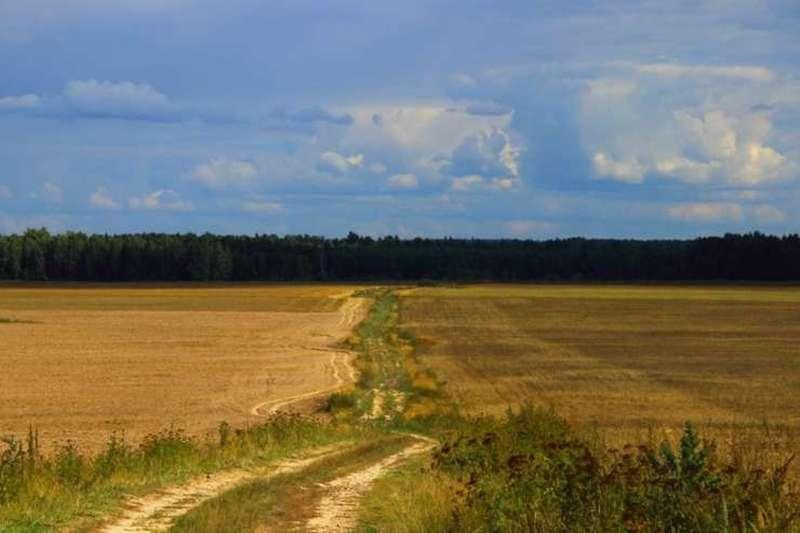 Drum agricol intre doua campuri cultivate