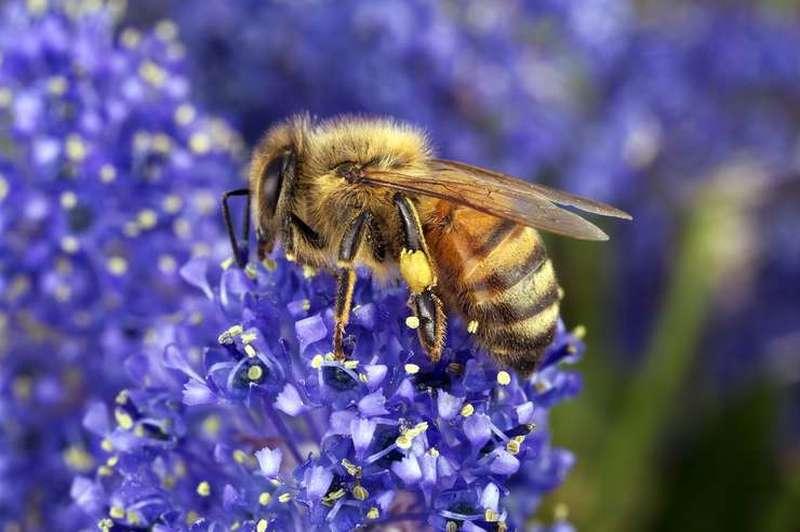 România s-a numărat printre principalii producători de miere la nivel european