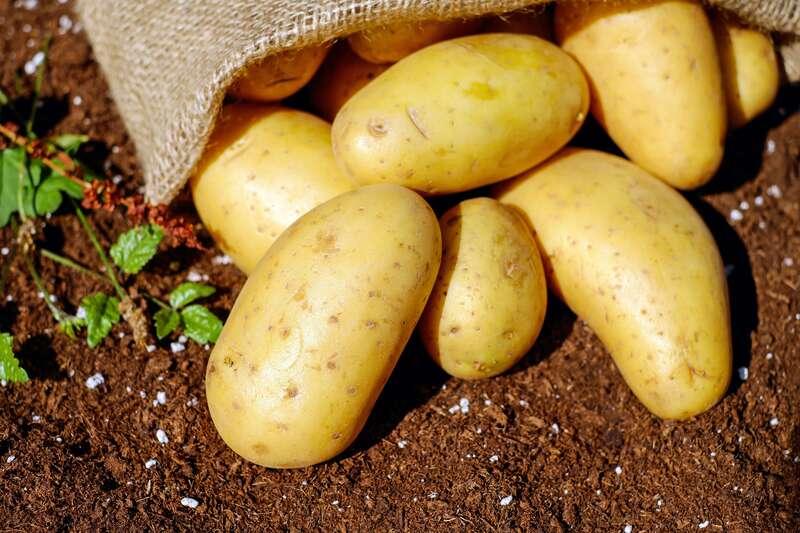 Cartofi rasturnati dintr-un sac de canepa pe pamantul gol