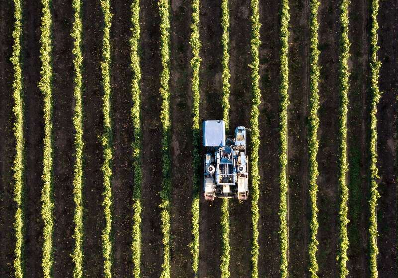 Agricultura inteligenta. Vedere din drona a unei plantatii
