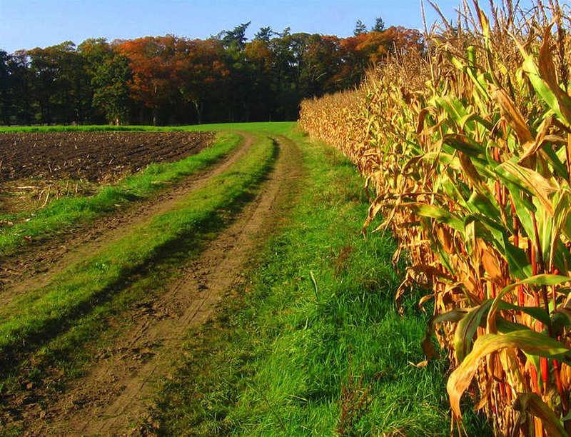 România se situează pe ultimele locuri în Uniunea Europeană când vine vorba de ponderea tinerilor care lucrează în agricultură