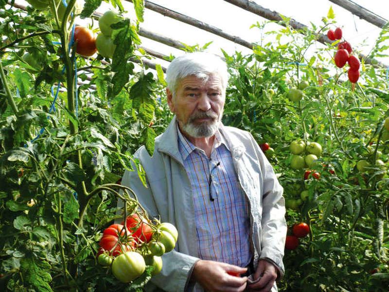 Valeriu Tabără, fost ministru al agriculturii și vicepreședinte al Academiei de Ştiinţe Agricole şi Silvice intr-o sera de rosii