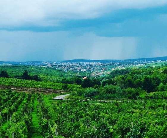 Terenuri plantate cu vita de vie in satul Vișani