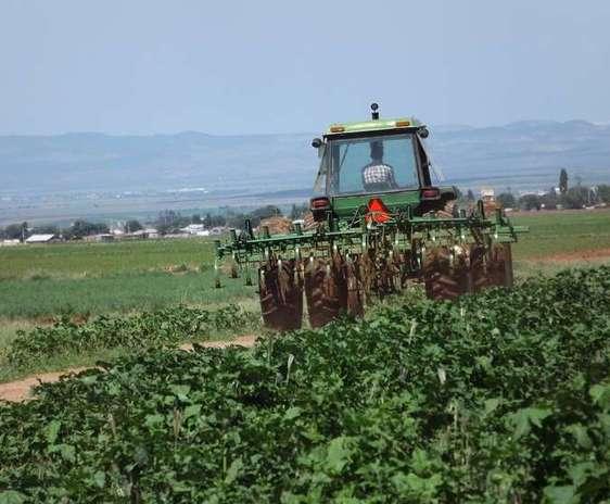 Tractor pe un drum agricol, intre doua campuri verzi