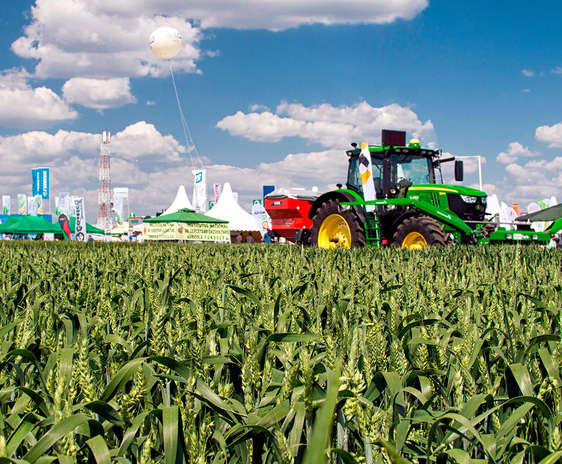 Tractor intr-un land de grau la Agriplanta Fundulea