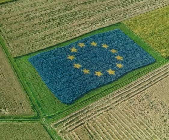 Drapelul Uniunii Europene facut din plante pe un camp agricol
